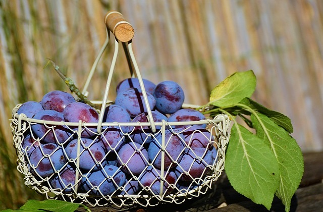 Plum can enhance fertility for both men and women