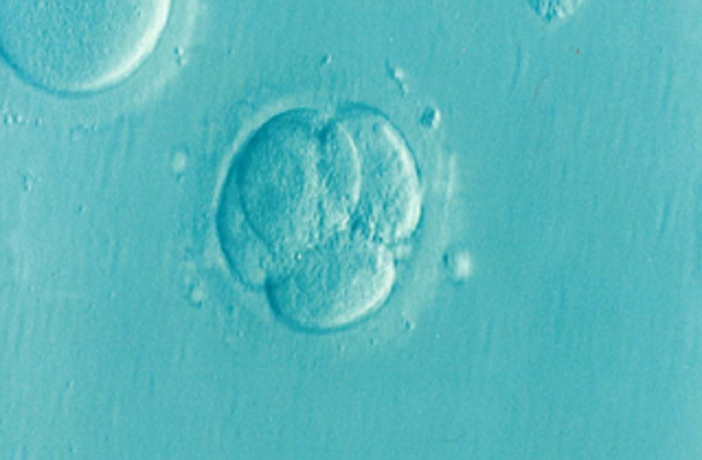 Use of medisave for IVF in Singapore