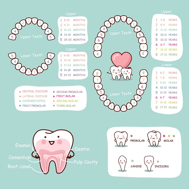 order of appearance of teeth in newborn during first two years