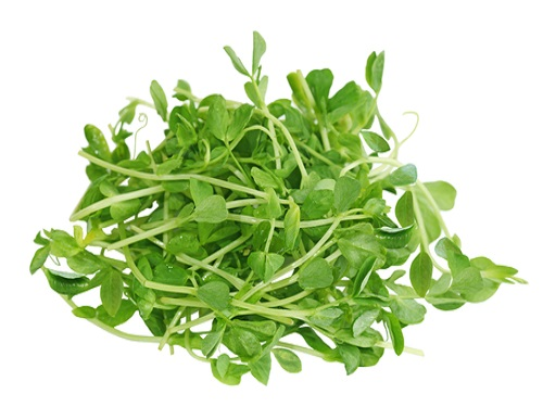 Is it safe to eat Pea sprout during pregnancy,breastfeeding or whil trying to conceive? Is it healthy for infant,toddler,or children to eat Pea sprout health benefits and nutrition value