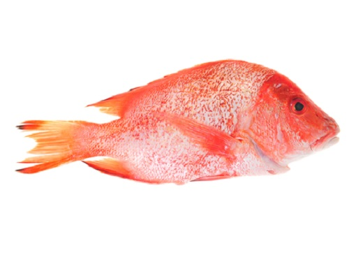 Is it safe to eat Red Snapper during pregnancy,breastfeeding or whil trying to conceive? Is it healthy for infant,toddler,or children to eat Red Snapper health benefits and nutrition value