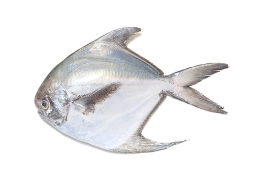Is it safe to eat Silver pomfret during pregnancy,breastfeeding or whil trying to conceive? Is it healthy for infant,toddler,or children to eat Silver pomfret health benefits and nutrition value