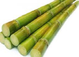 Is it safe to eat Sugar cane during pregnancy,breastfeeding or whil trying to conceive? Is it healthy for infant,toddler,or children to eat Sugar cane health benefits and nutrition value